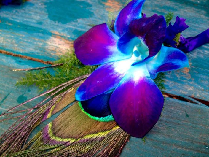 Peacock Feather - Teal Orchid